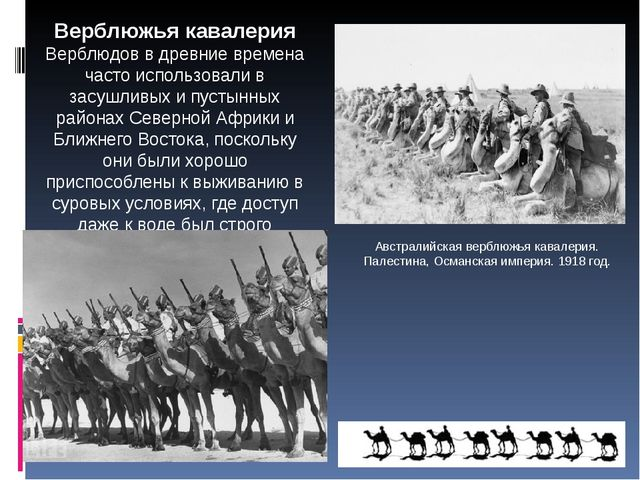 Австралийская верблюжья кавалерия. Палестина, Османская империя. 1918 год. Ве...