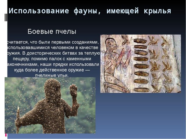 Использование фауны, имеющей крылья Боевые пчелы считается, что были первыми...