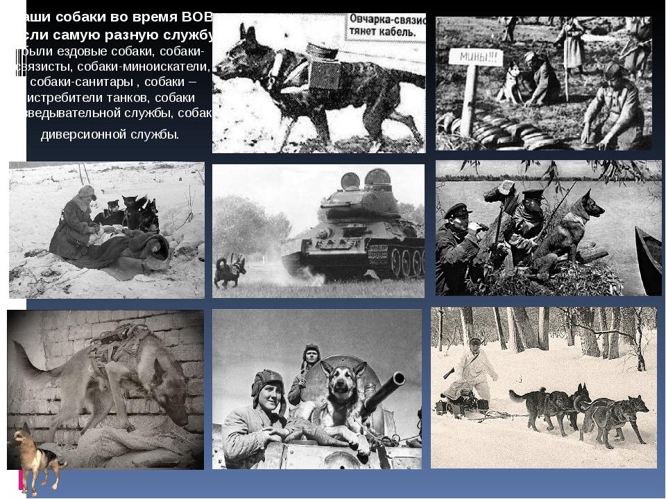 Наши собаки во время ВОВ несли самую разную службу: были ездовые собаки, соба...