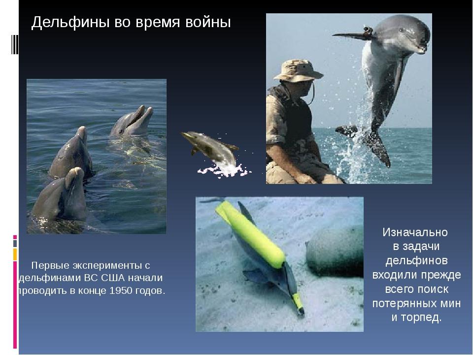 Первые эксперименты с дельфинами ВС США начали проводить в конце 1950 годов....