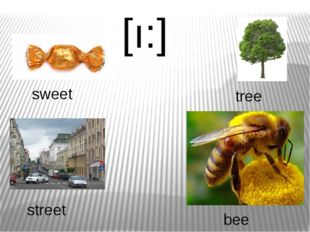 [ı:] sweet tree bee street