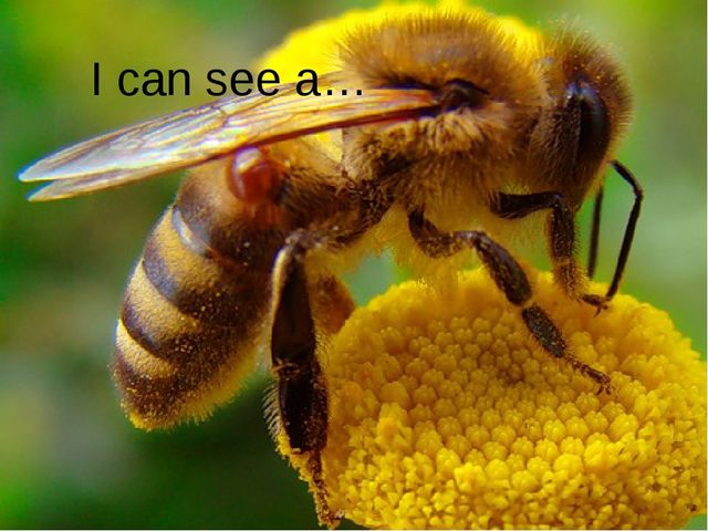I can see a…