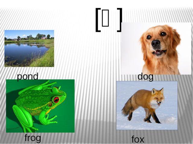 [ɒ]   pond dog fox frog