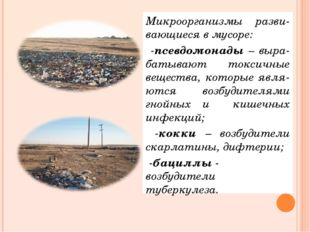 Микроорганизмы разви-вающиеся в мусоре: -псевдомонады – выра-батывают токсичн