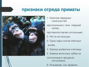 признаки отряда приматы 1. Наличие передних конечностей хватательного типа (п
