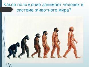 Какое положение занимает человек в системе животного мира?