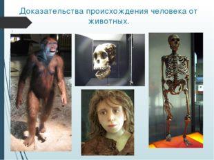 Доказательства происхождения человека от животных.