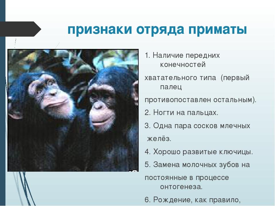 признаки отряда приматы 1. Наличие передних конечностей хватательного типа (п...