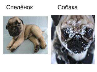 Спелёнок Собака