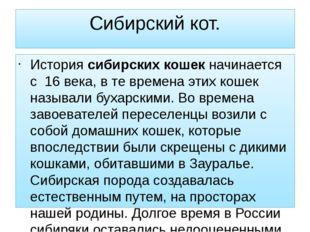 Сибирский кот. Историясибирских кошекначинается с 16 века, в те времена эти