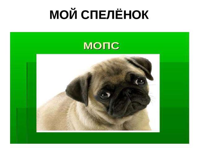 МОЙ СПЕЛЁНОК