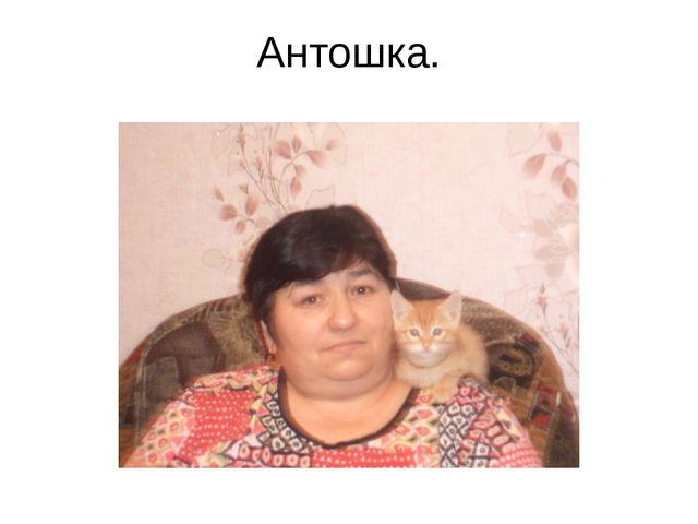 Антошка.