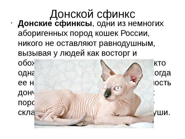 Донской сфинкс Донские сфинксы, одни из немногих аборигенных пород кошек Росс...