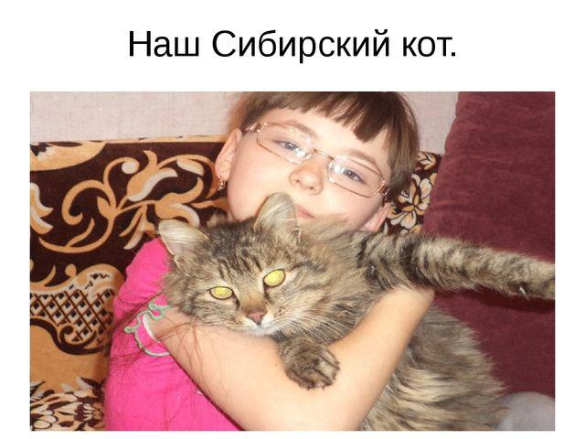 Наш Сибирский кот.