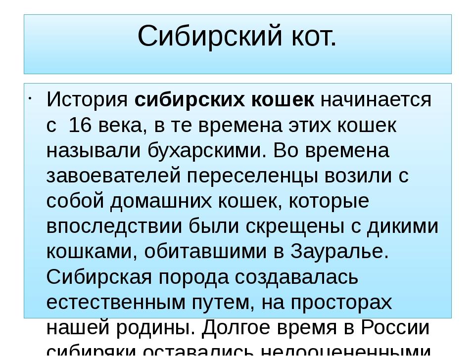 Сибирский кот. Историясибирских кошекначинается с 16 века, в те времена эти...