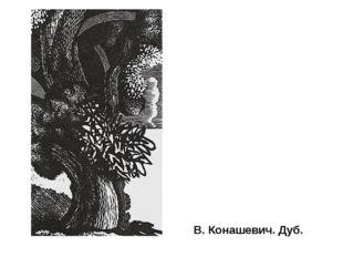 В. Конашевич. Дуб. Мастера-граверы все большее внимание уделяли разнообразию