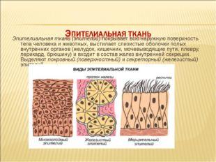 Эпителиальная ткань (эпителий) покрывает всю наружную поверхность тела челов