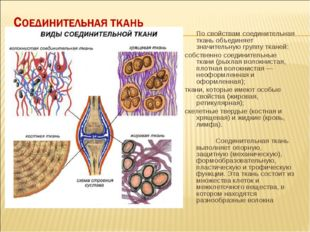 По свойствам соединительная ткань объединяет значительную группу тканей: со