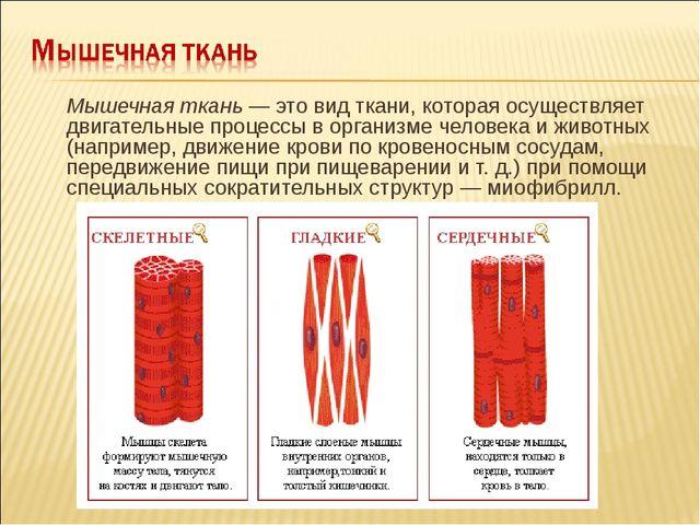 Мышечная ткань — это вид ткани, которая осуществляет двигательные процессы в...