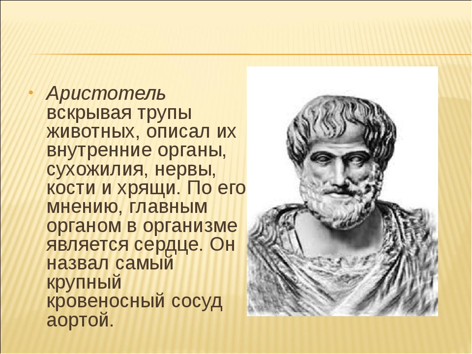 Аристотель вскрывая трупы животных, описал их внутренние органы, сухожилия, н...