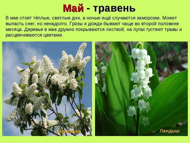 Май - травень В мае стоят тёплые, светлые дни, а ночью ещё случаются заморозк...