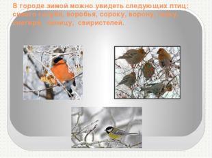 В городе зимой можно увидеть следующих птиц: сизого голубя, воробья, сороку,