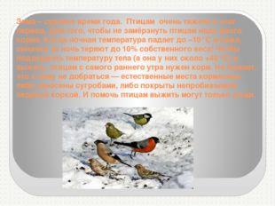 Зима – суровое время года. Птицам очень тяжело в этот период. Для того, чтоб