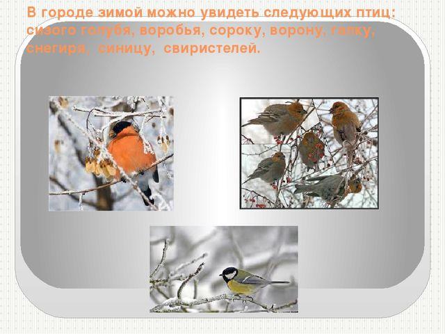 В городе зимой можно увидеть следующих птиц: сизого голубя, воробья, сороку,...