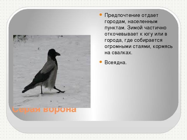 Серая ворона Предпочтение отдает городам, населенным пунктам. Зимой частично...