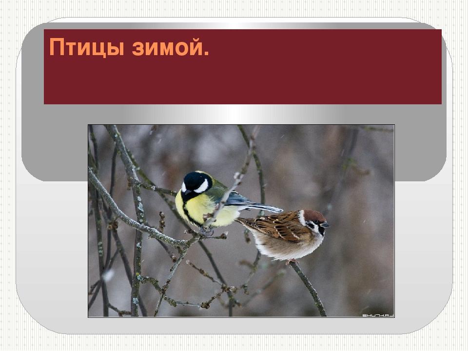 Птицы зимой.