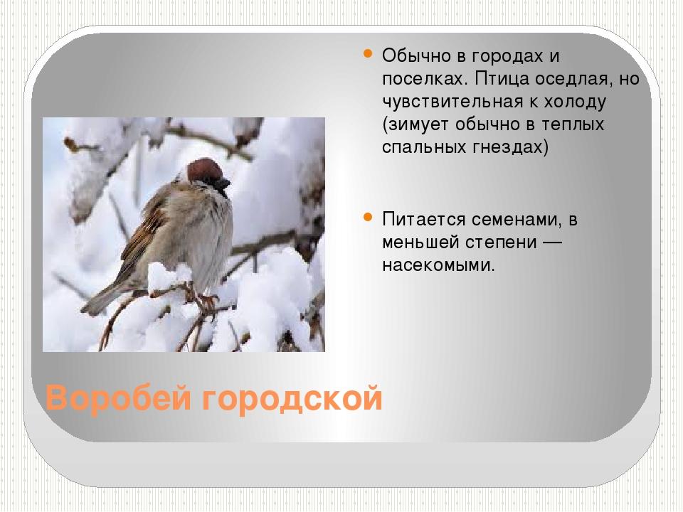 Воробей городской Обычно в городах и поселках. Птица оседлая, но чувствительн...