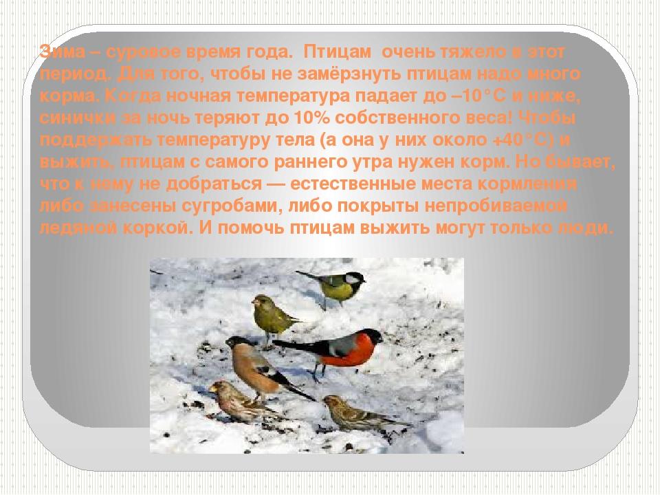 Зима – суровое время года. Птицам очень тяжело в этот период. Для того, чтоб...