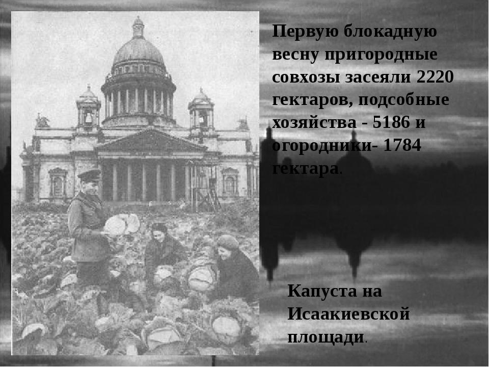 Капуста на Исаакиевской площади. Первую блокадную весну пригородные совхозы з...