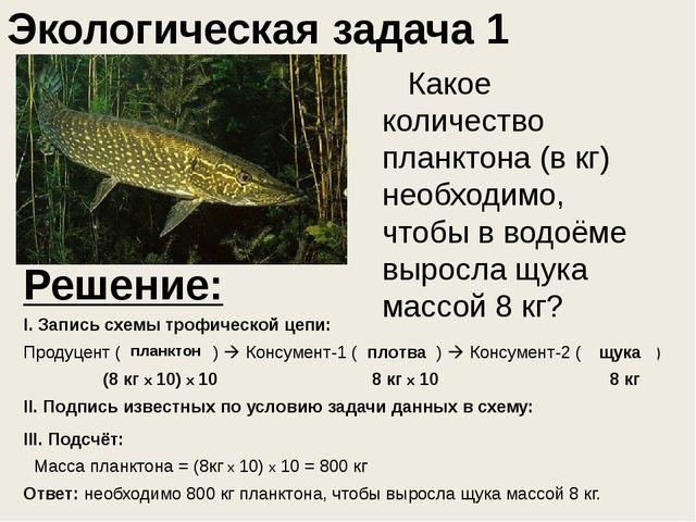Какое количество планктона (в кг) необходимо, чтобы в водоёме выросла щука...