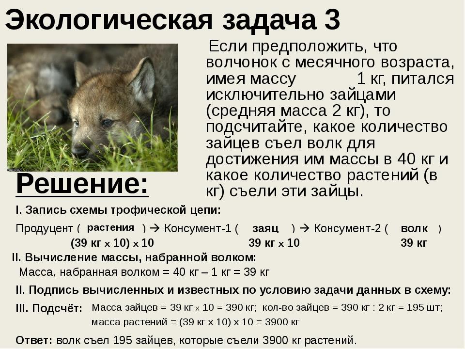 Экологическая задача 3 Если предположить, что волчонок с месячного возраста,...