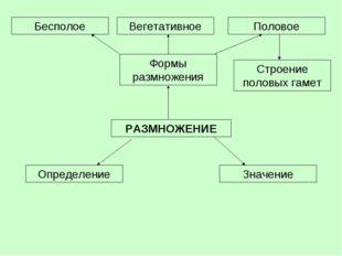 РАЗМНОЖЕНИЕ Определение Формы размножения Значение Бесполое Вегетативное Поло