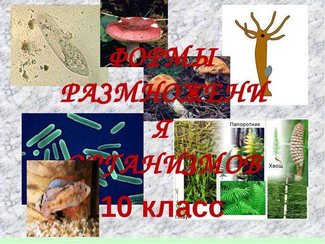 ФОРМЫ РАЗМНОЖЕНИЯ ОРГАНИЗМОВ 10 класс