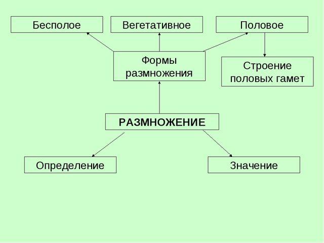 РАЗМНОЖЕНИЕ Определение Формы размножения Значение Бесполое Вегетативное Поло...