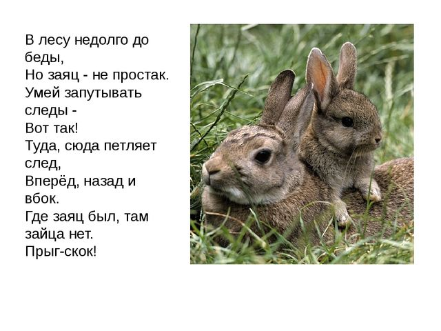 В лесу недолго до беды, Но заяц - не простак. Умей запутывать следы - Вот так...