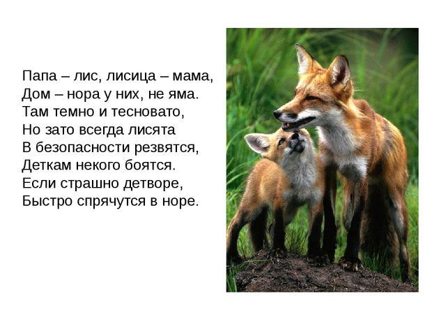Папа – лис, лисица – мама, Дом – нора у них, не яма. Там темно и тесновато,...