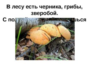 В лесу есть черника, грибы, зверобой. С полной корзиной вернешься домой.