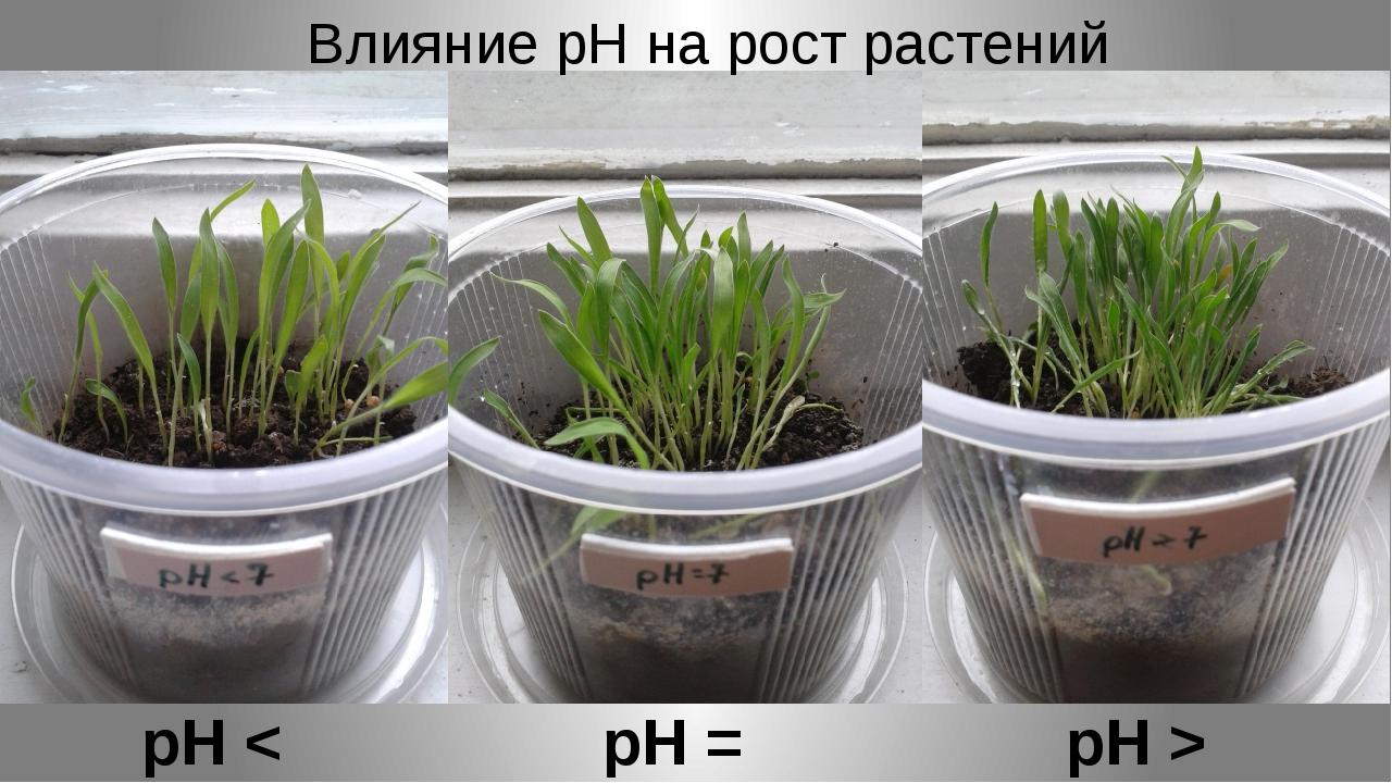 рН < 7 рН = 7 рН > 7 Влияние рН на рост растений