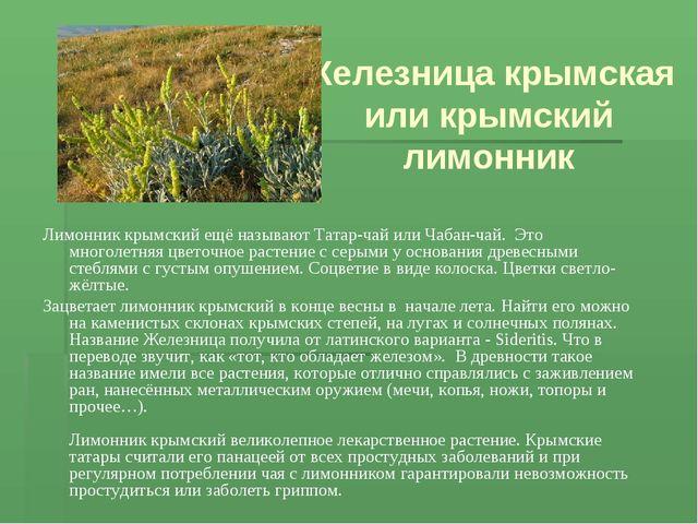Железница крымская или крымский лимонник Лимонник крымский ещё называют Татар...