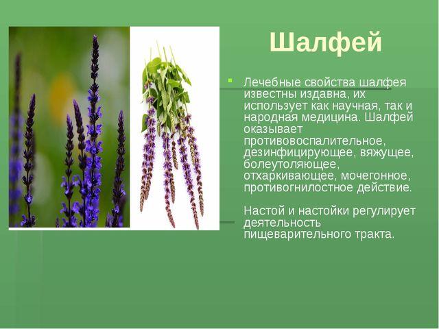Шалфей Лечебные свойства шалфея известны издавна, их использует как научная,...