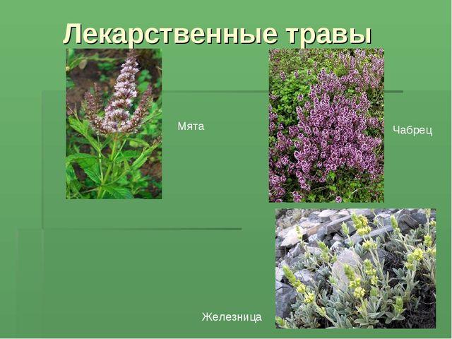 Лекарственные травы Чабрец Мята Железница