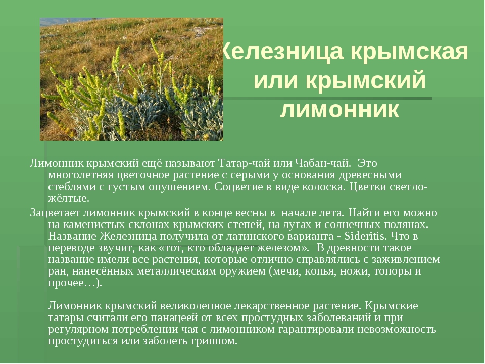 снимать лекарственные травы крыма фото и описание скачивании получаете