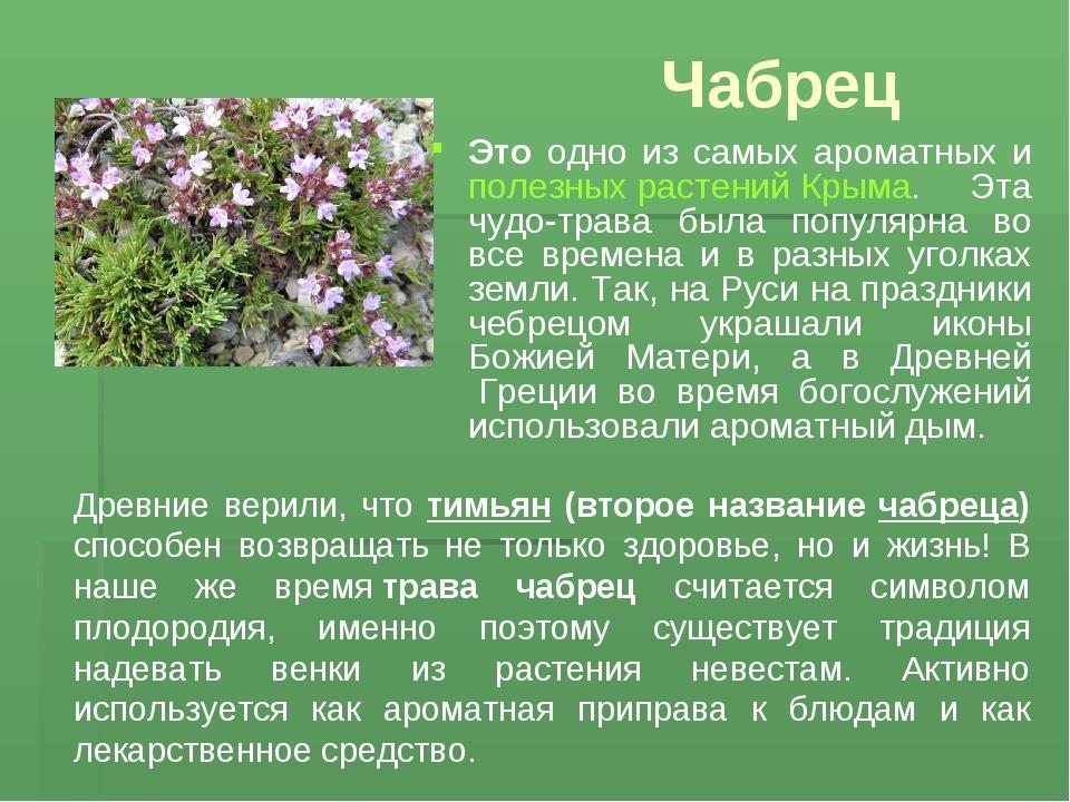 одна фото ползучих цветов и их описание большинстве