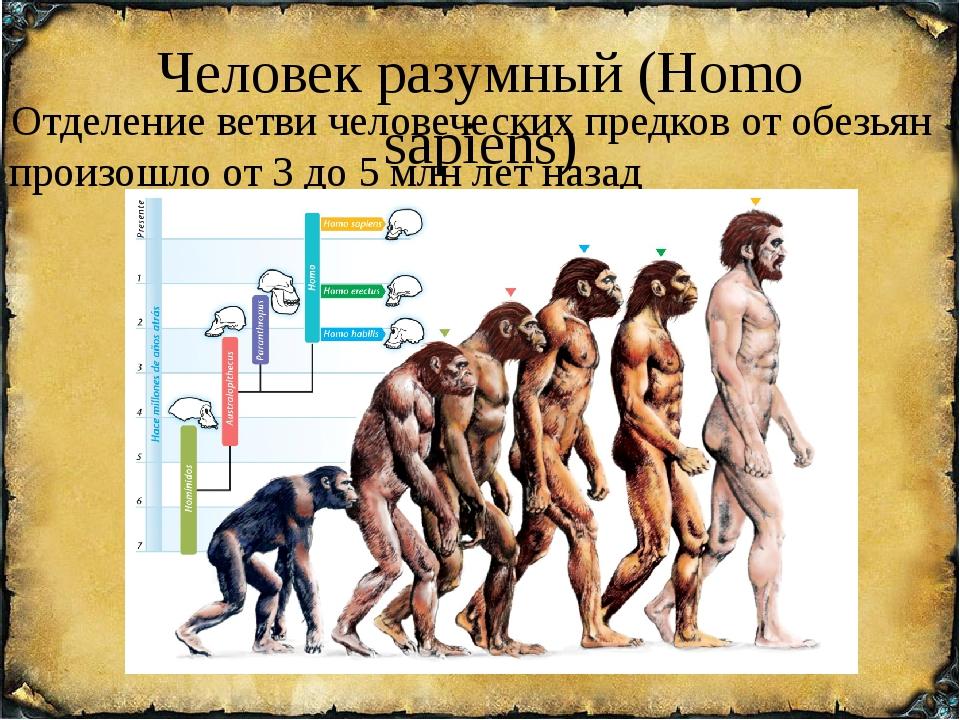 Человек разумный (Homo sapiens) Отделение ветви человеческих предков от обезь...