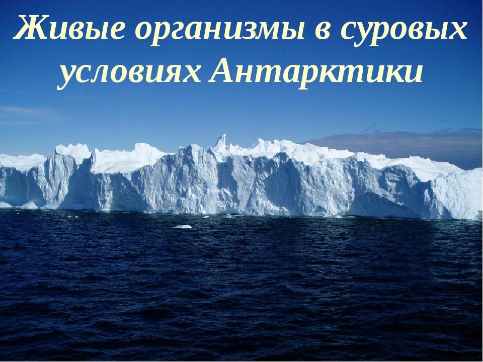 Живые организмы в суровых условиях Антарктики