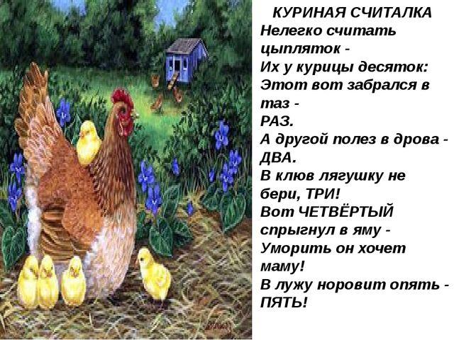КУРИНАЯ СЧИТАЛКА Нелегко считать цыпляток - Их у курицы десяток: Этот вот заб...